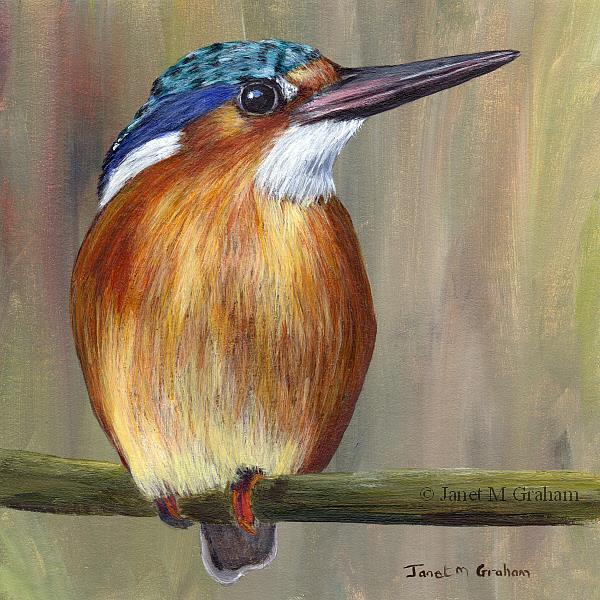 Art: Malachite Kingfisher by Artist Janet M Graham