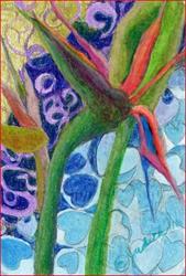 Art: birdofparadise by Artist Judith A Brody