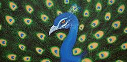 Art: Peacock by Artist Laura Barbosa