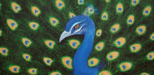 Art: Peacock by Artist Laura Barbosa
