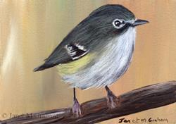 Art: Cassin's Vireo ACEO by Artist Janet M Graham
