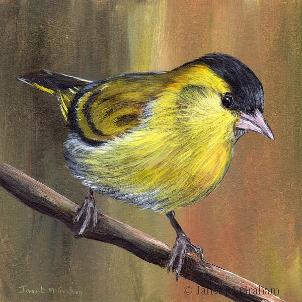 Art: Siskin No 2 by Artist Janet M Graham
