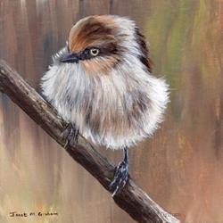 Art: Bushtit by Artist Janet M Graham