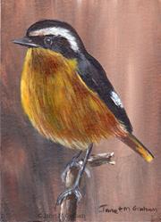 Art: Moussier's Redstart ACEO by Artist Janet M Graham