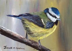 Art: Blue Tit ACEO by Artist Janet M Graham