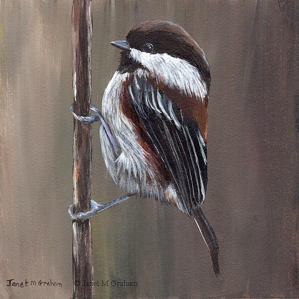 Art: Chestnut Backed Chickadee No 2 by Artist Janet M Graham