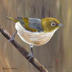 Art: Silvereye No 2 by Artist Janet M Graham