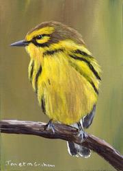 Art: Prairie Warbler ACEO by Artist Janet M Graham