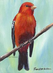 Art: Scarlet Tanager ACEO by Artist Janet M Graham