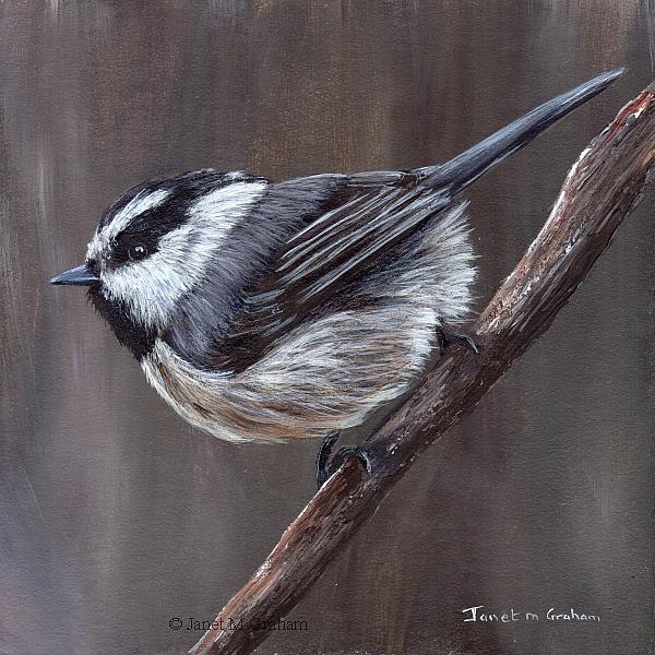 Art: Mountain Chickadee by Artist Janet M Graham