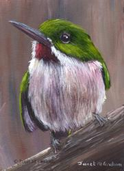 Art: Broad Billed Tody ACEO by Artist Janet M Graham