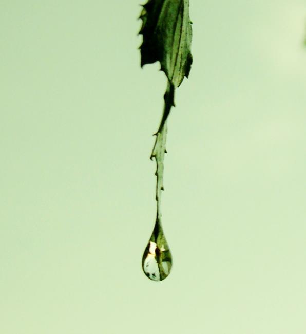Art: Raindrop by Artist Leea Baltes