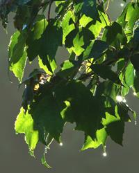 Art: Sunshine and Raindrops by Artist Leea Baltes