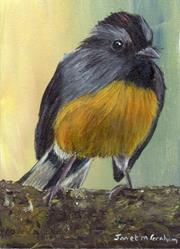 Art: Slate Throated Redstart ACEO by Artist Janet M Graham