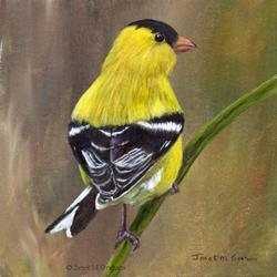 Art: American Goldfinch No 2 by Artist Janet M Graham