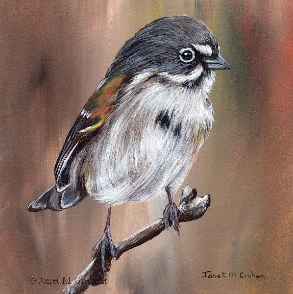 Art: Bell's Sparrow by Artist Janet M Graham