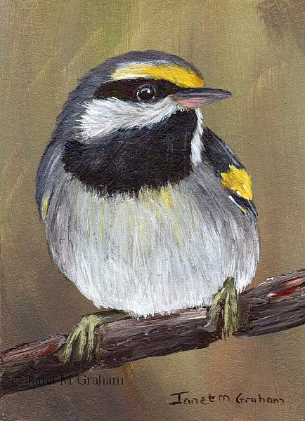 Art: Golden Winged Warbler ACEO by Artist Janet M Graham