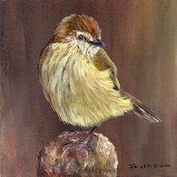 Art: Striated Thornbill by Artist Janet M Graham