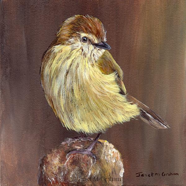 Art: Striated Thornbill by Artist Janet M Graham