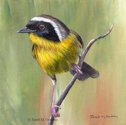 Art: Common Yellowthroat No 3 by Artist Janet M Graham