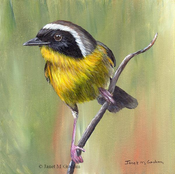 Art: Common Yellowthroat No 3 by Artist Janet M Graham