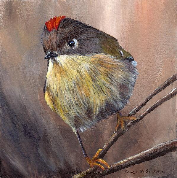 Art: Ruby Crowned Kinglet No 4 by Artist Janet M Graham