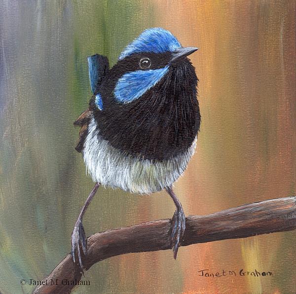 Art: Superb Fairy Wren by Artist Janet M Graham