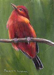 Art: Summer Tanager ACEO by Artist Janet M Graham