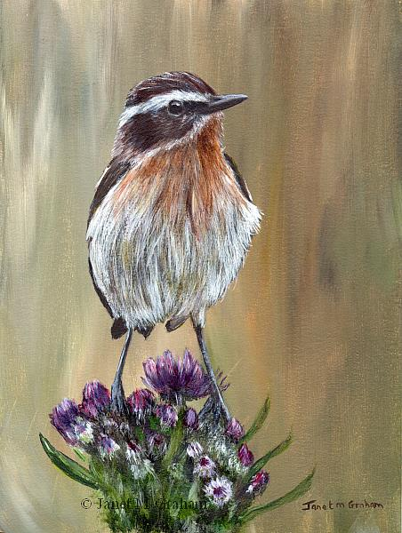 Art: Whinchat by Artist Janet M Graham