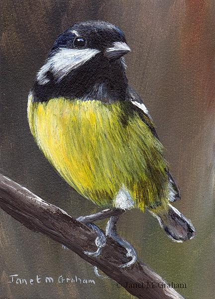 Art: Yellow Bellied Tit ACEO by Artist Janet M Graham