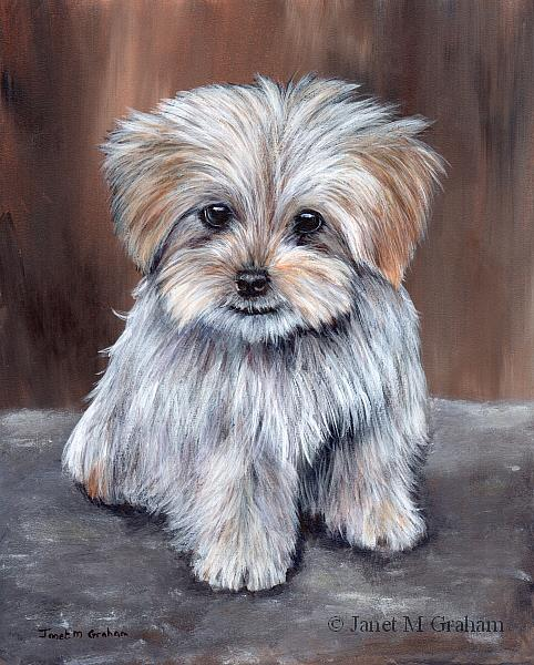 Maltese Pup - by Janet M Graham from Animal Gallery