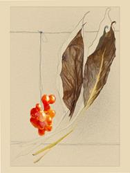 Art: Hanging and Balanced by Artist Carolyn Schiffhouer