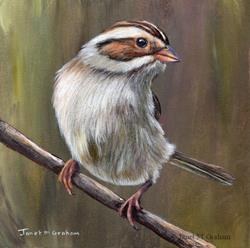 Art: Clay Coloured Sparrow by Artist Janet M Graham