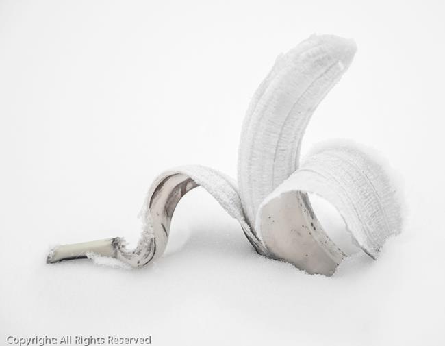 Art: Snow Banana 10.5 x 13.5  (01/05) by Artist Todd Suttles