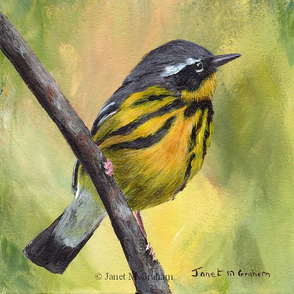 Art: Magnolia Warbler No 2 by Artist Janet M Graham