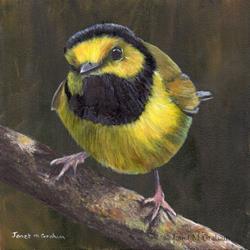 Art: Hooded Warbler by Artist Janet M Graham