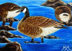 Art: Canada Geese by Artist Monique Morin Matson