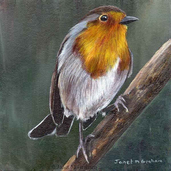 Art: Robin No 12 by Artist Janet M Graham