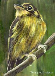 Art: White Throated Spadebill ACEO by Artist Janet M Graham
