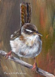 Art: Marsh Wren ACEO by Artist Janet M Graham
