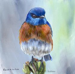 Art: Western Bluebird by Artist Janet M Graham