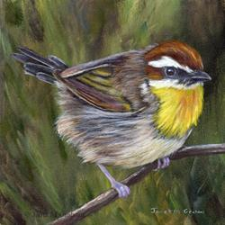 Art: Rufous Capped Warbler No 3 by Artist Janet M Graham