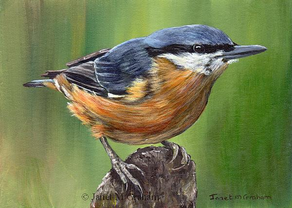 Art: Nuthatch by Artist Janet M Graham