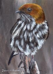 Art: Lesser Striped Swallow ACEO by Artist Janet M Graham