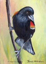 Art: Red Winged Blackbird ACEO by Artist Janet M Graham