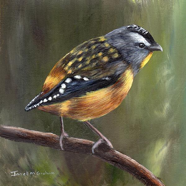 Art: Spotted Pardalote No 2 by Artist Janet M Graham