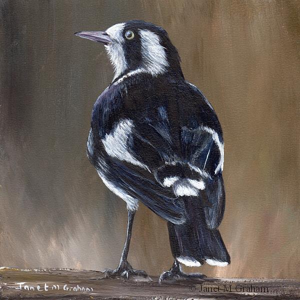 Art: Magpie Lark by Artist Janet M Graham