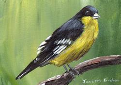 Art: Lesser Goldfinch ACEO by Artist Janet M Graham
