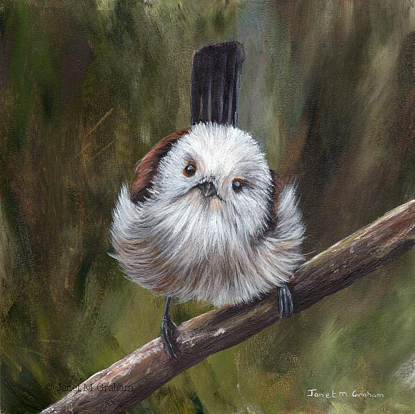 Art: Long Tailed Tit by Artist Janet M Graham