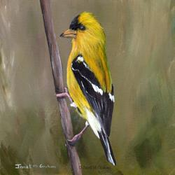 Art: American Goldfinch No 3 by Artist Janet M Graham